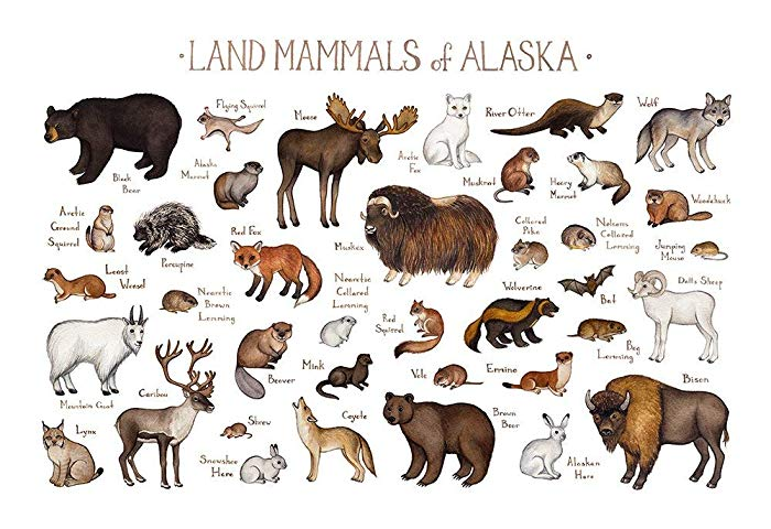 Amazon com land mammals. Alaska clipart animal alaska