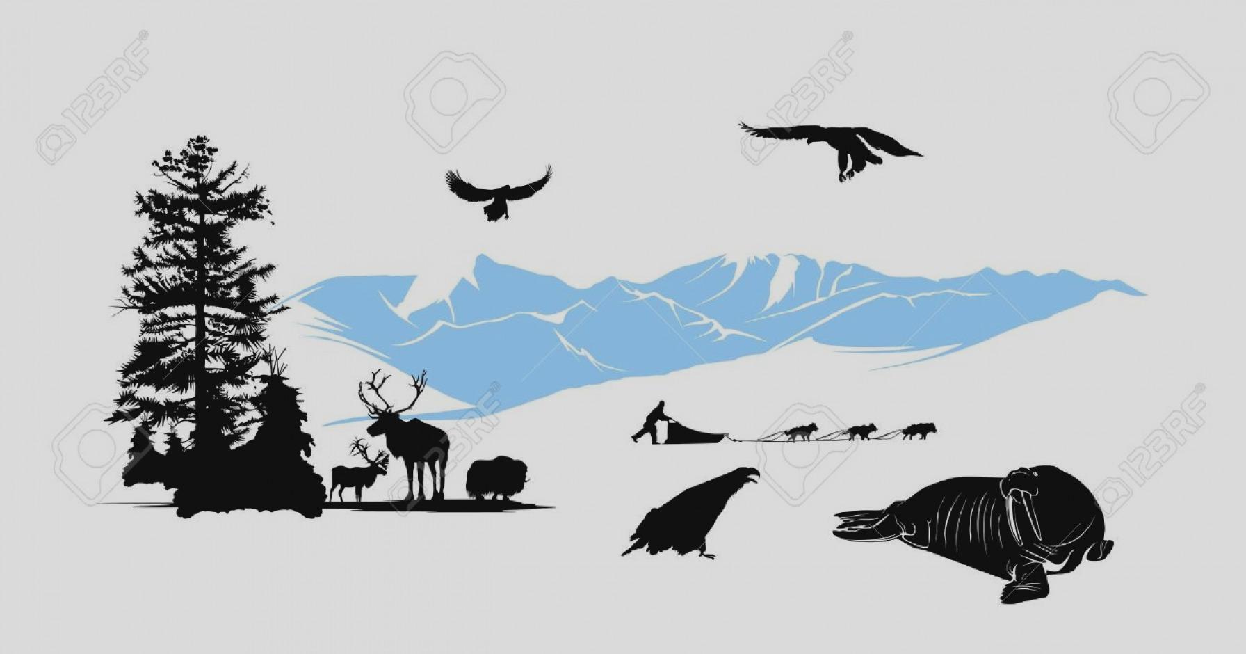 Amazing panda free images. Alaska clipart clip art