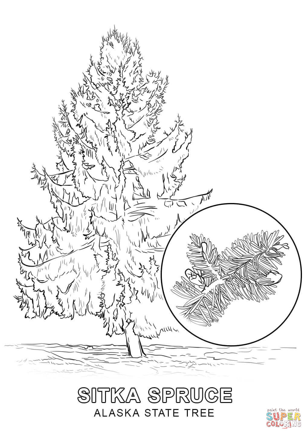Alaska clipart color. State tree coloring page