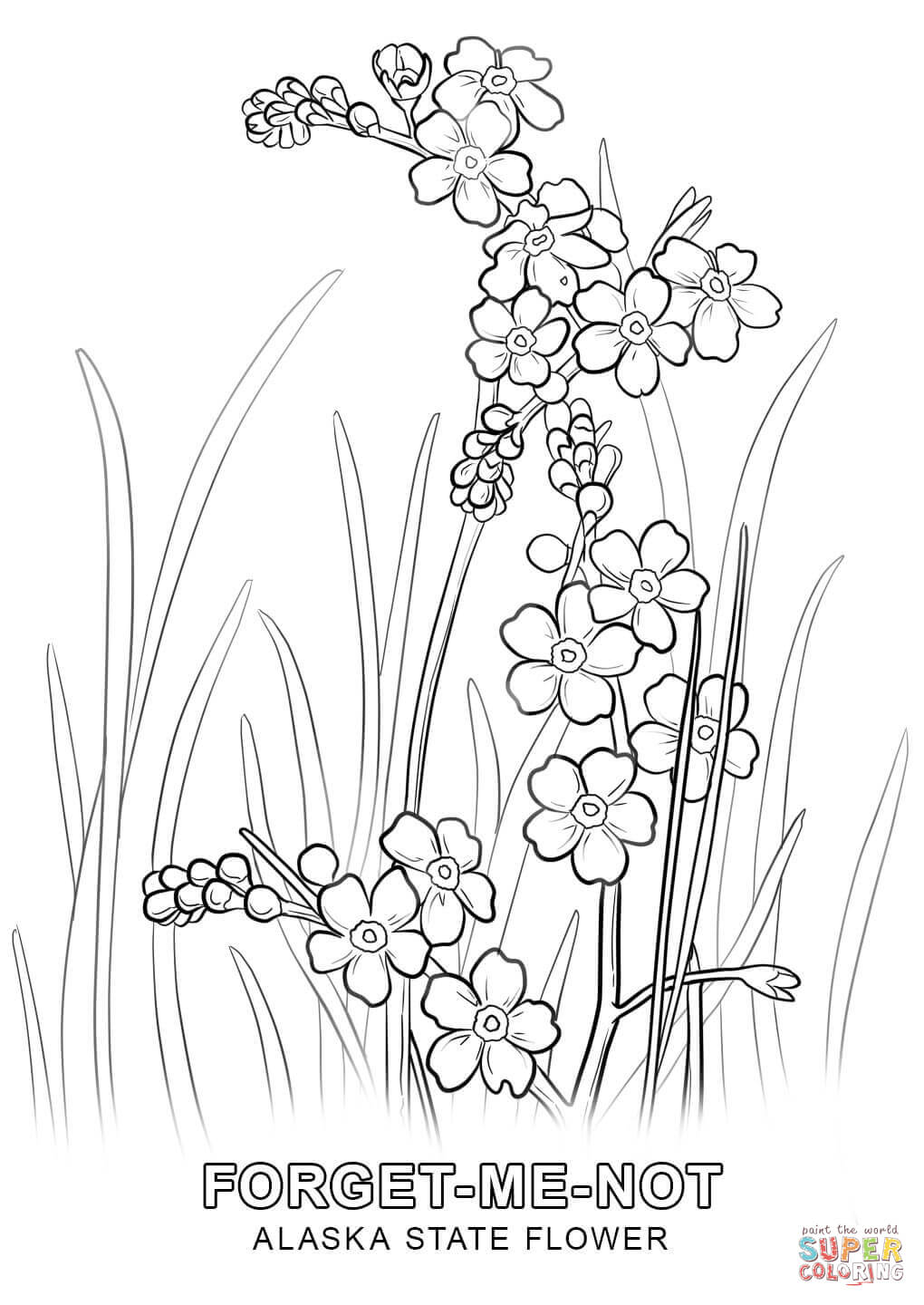 Alaska clipart coloring page. State flower free printable