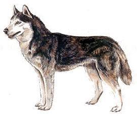 collection of alaskan. Alaska clipart husky