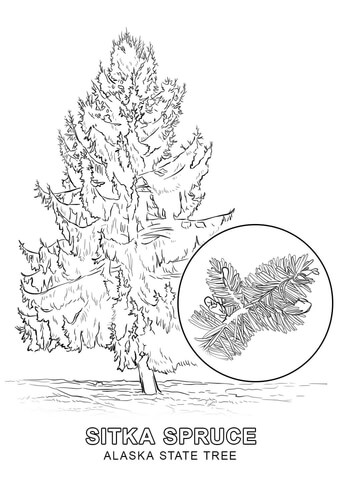 Alaska clipart printable. State tree coloring page