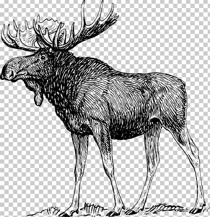 Drawing deer art png. Alaska clipart sketch