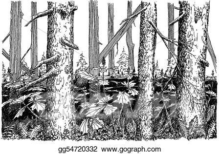 Drawing spruce woods gg. Alaska clipart sketch