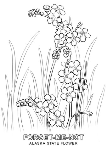 Alaska clipart sketch. State flower coloring page