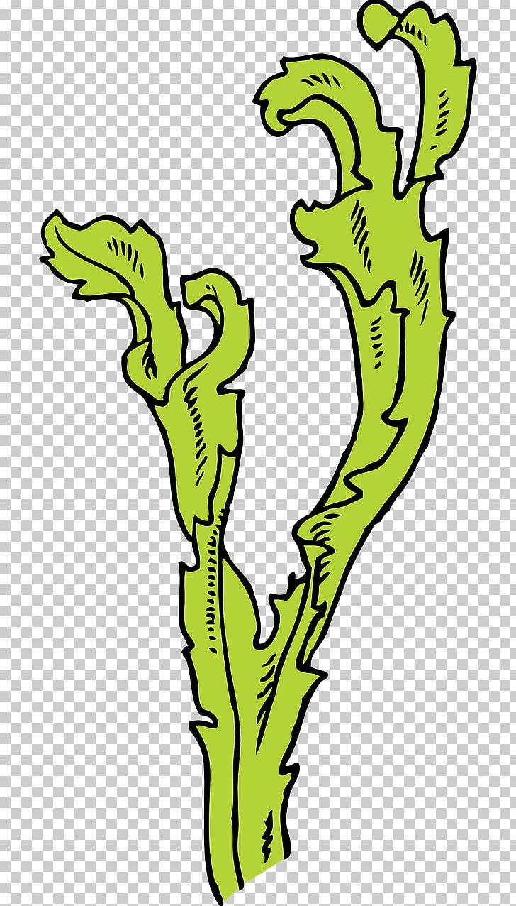 Algae clipart algea. Seaweed kelp png area