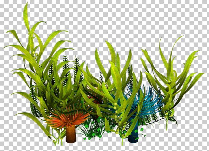 Algae clipart aquarium plant. Underwater aquatic plants seaweed