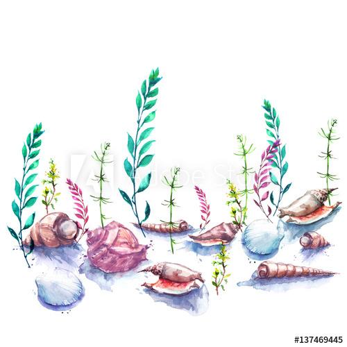 Algae clipart aquarium plant. Vintage watercolor drawing the