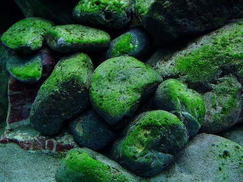 Fish tank best tag. Algae clipart aquarium plant