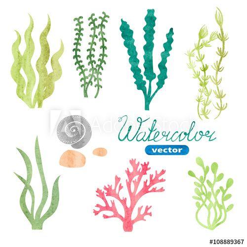 Set of watercolor seaweed. Algae clipart aquarium plant