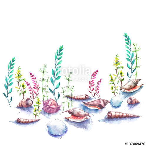 Vintage watercolor drawing the. Algae clipart aquatic plant