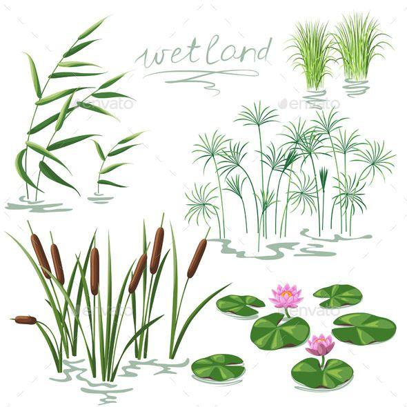 Algae clipart aquatic plant. Wetland plants set botany