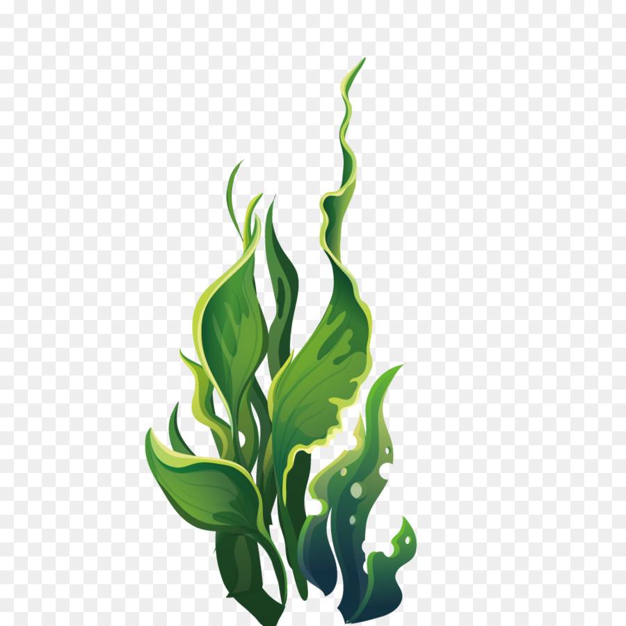 Algae clipart aquatic plant. Wide green leaves marine