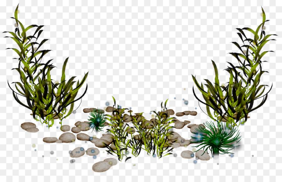 Sea clip art coral. Algae clipart aquatic plant