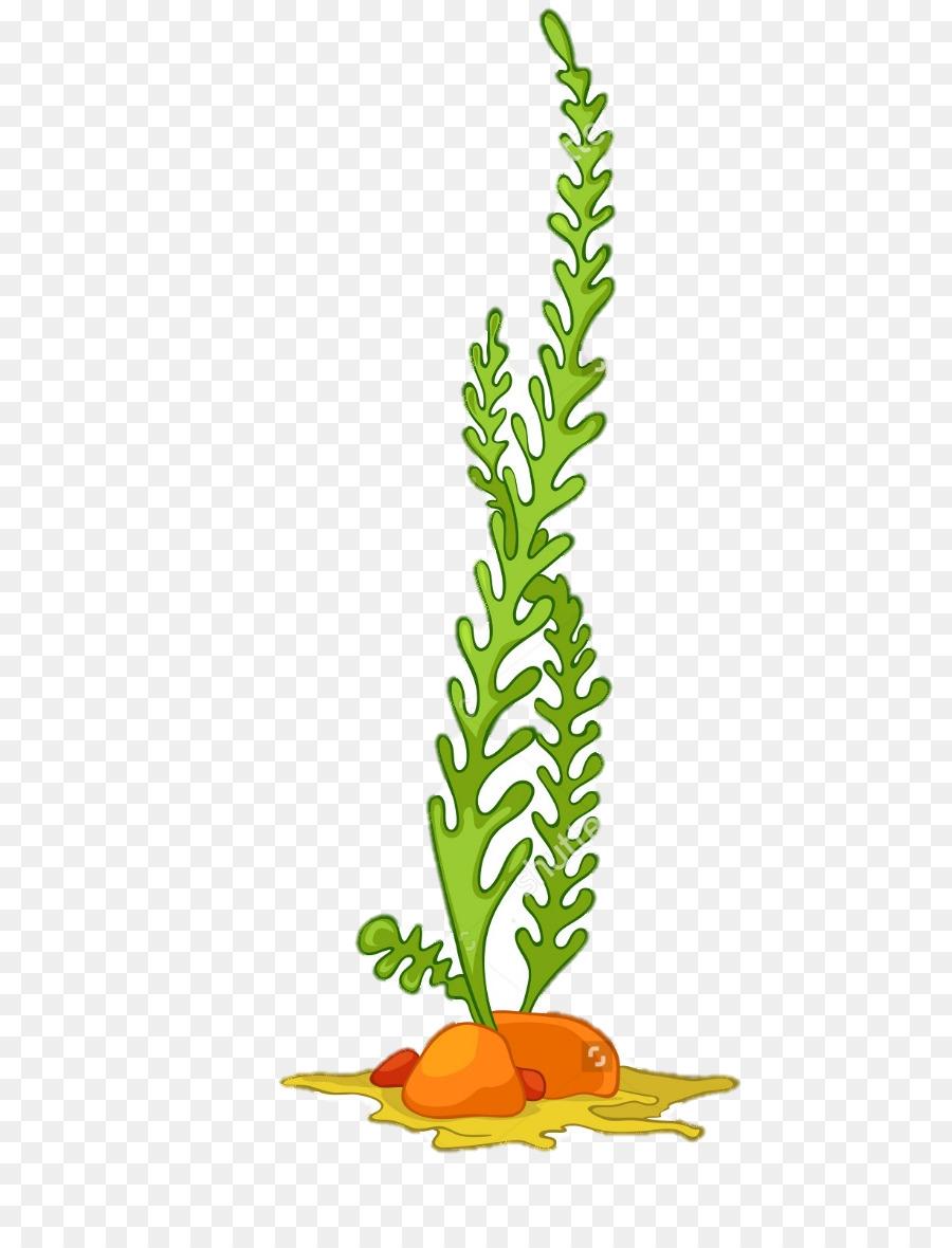 Algae Seaweed Aquatic Plants Clip art