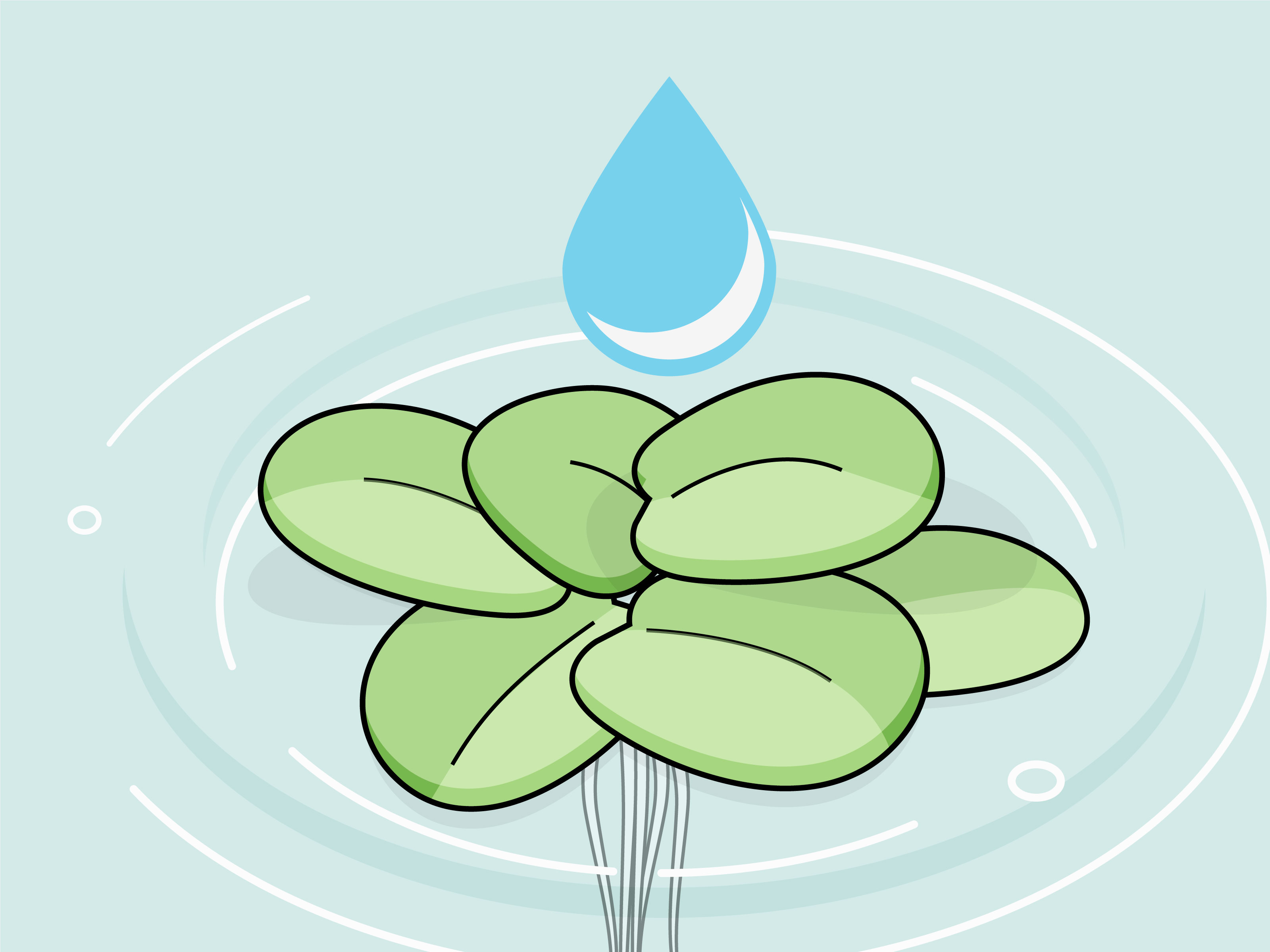 Algae clipart aquatic plant. How to grow freshwater