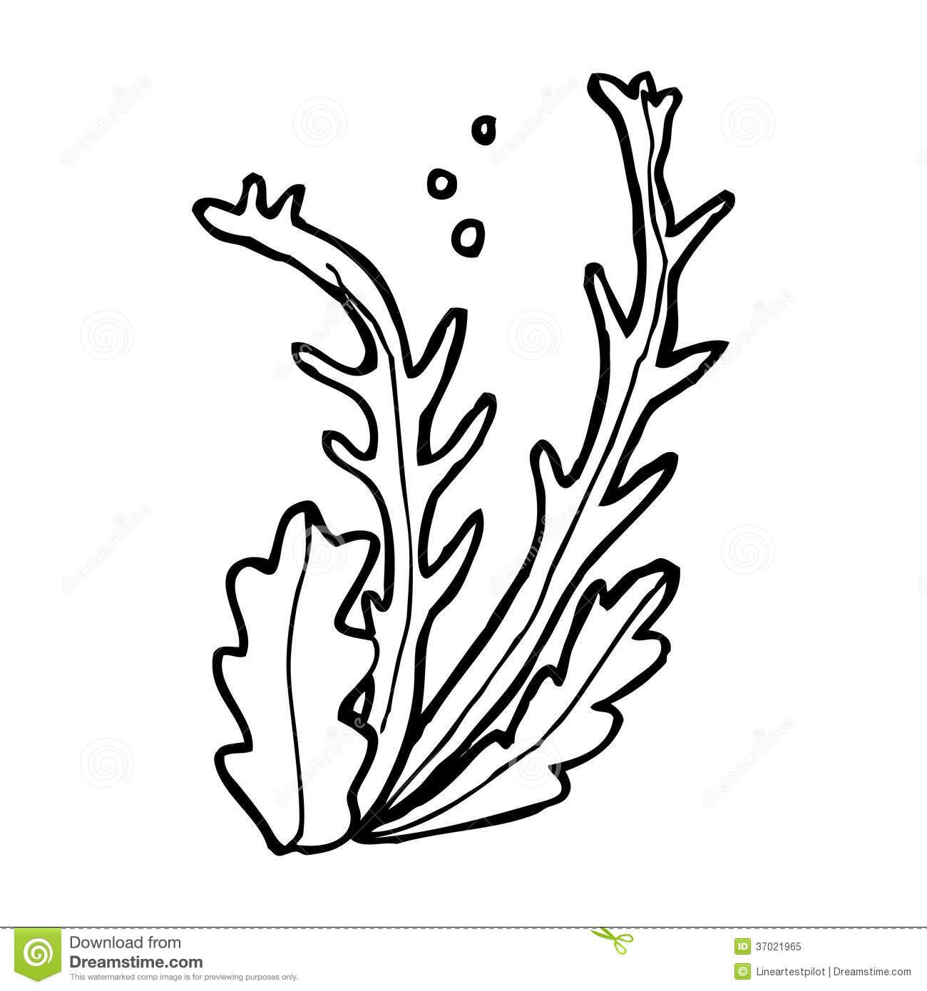 Algae clipart black and white