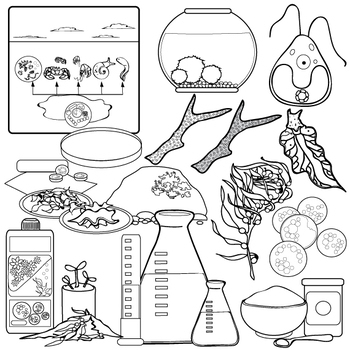 Algae clipart black and white. Clip art set by