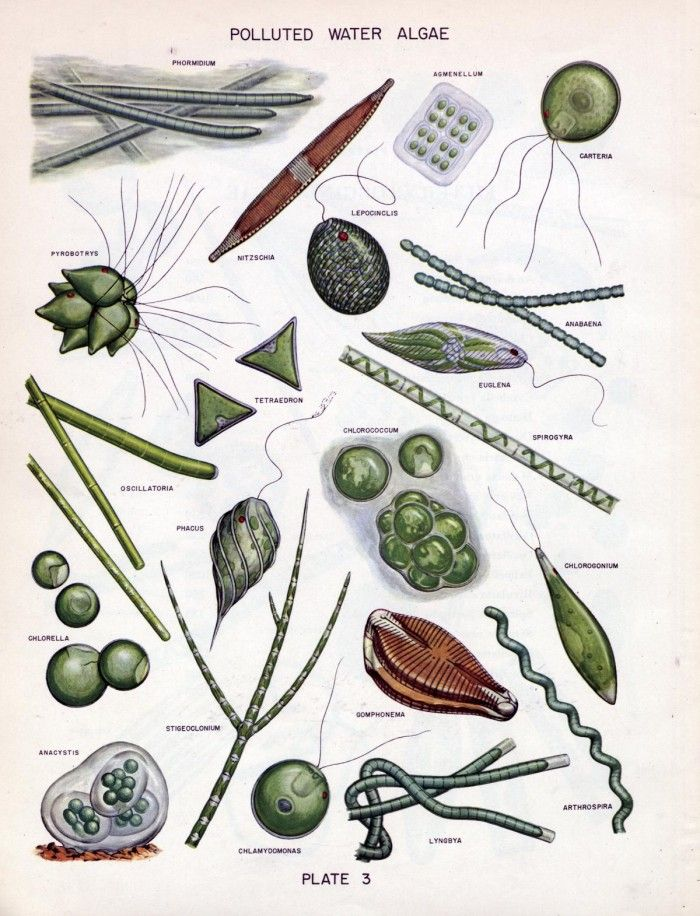 In water supplies an. Algae clipart botany