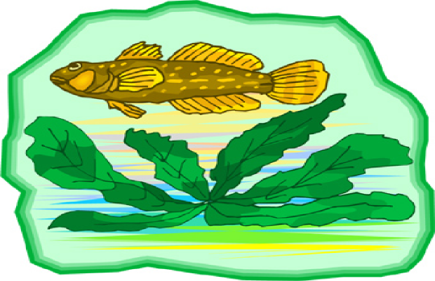 Algae clipart clip art. State warns of toxic