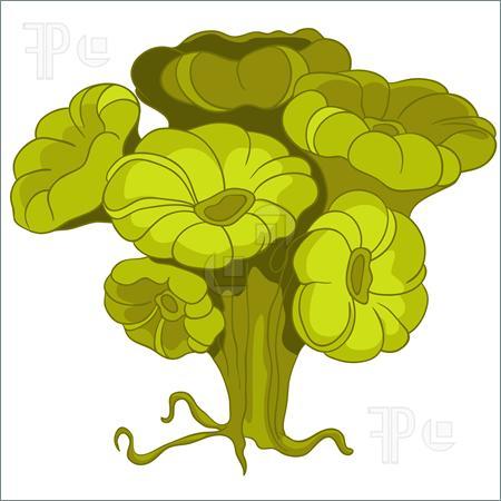 . Algae clipart codium