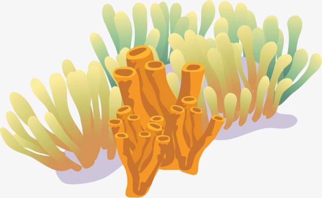 Color Algae Coral