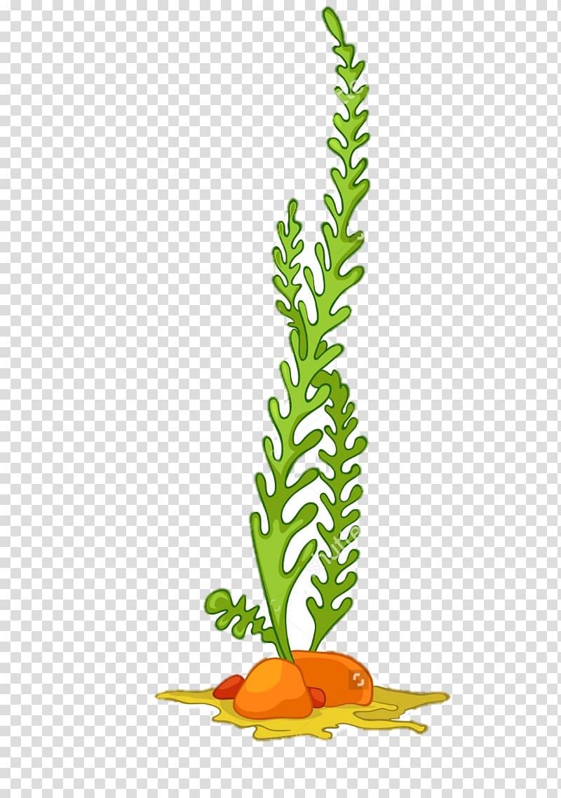 Green leafed plant illustration. Algae clipart coral