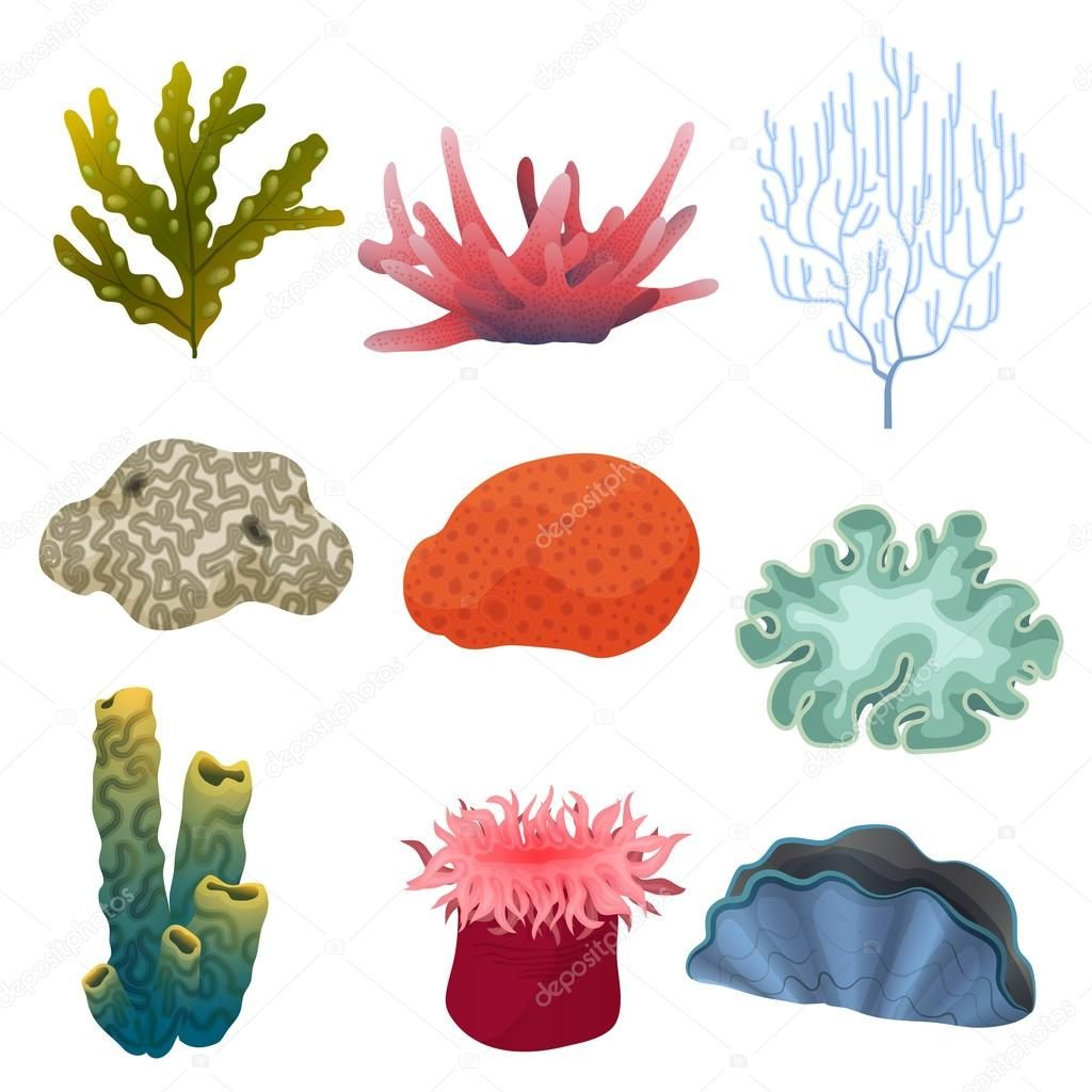 Image result for vector. Algae clipart coral reef