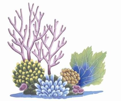 Image result for art. Algae clipart coral reef