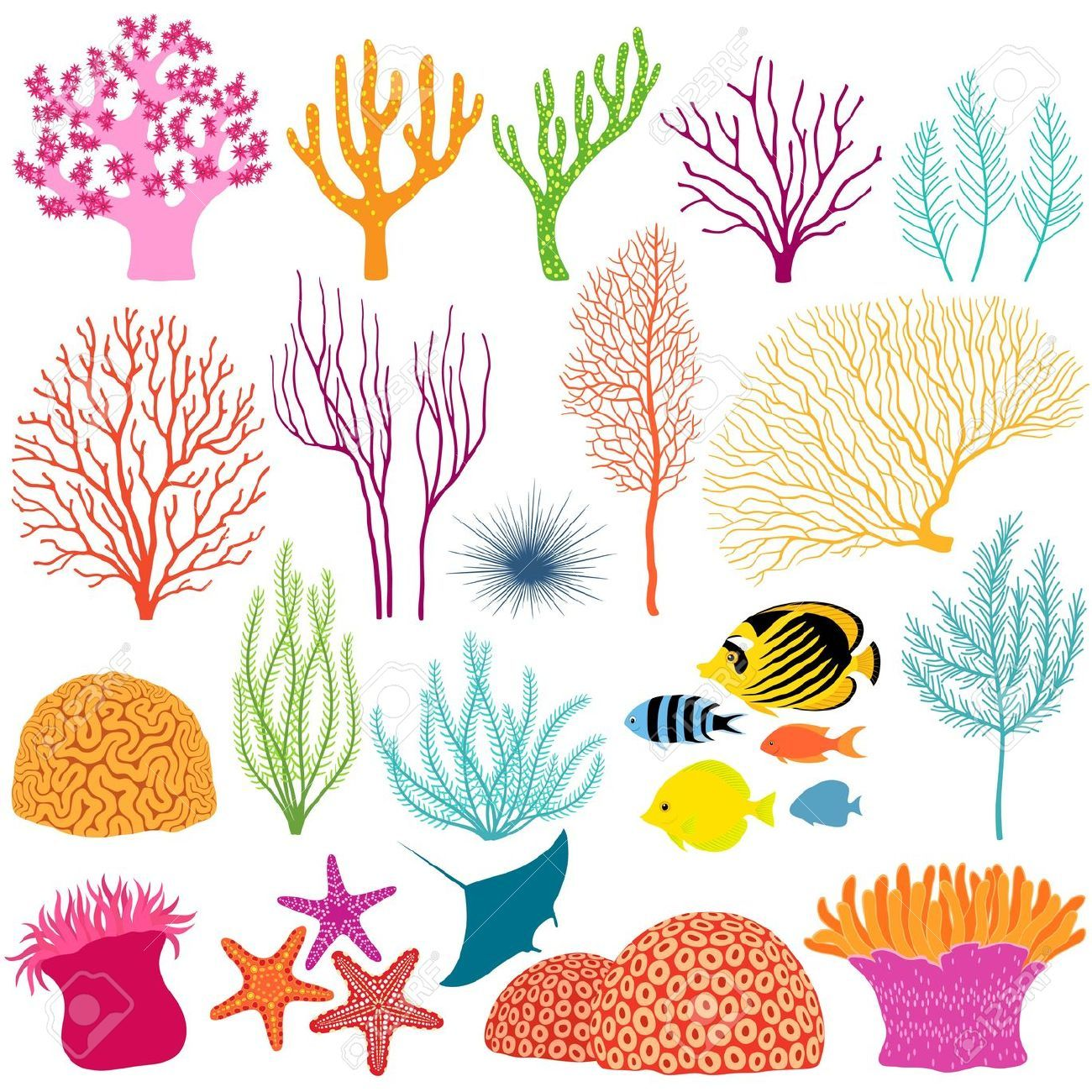 Coral Reef Underwater Stock Vector Illustration And Royalty Free