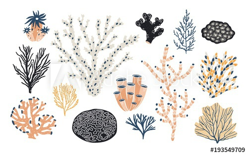Collection of various corals. Algae clipart creature
