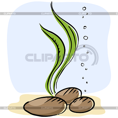 Stock images by pzromashka. Algae clipart cute