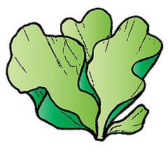 Algae clipart drawn. Sea weed free download