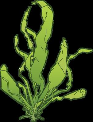 Algae clipart drawn. Green drawing clipartxtras