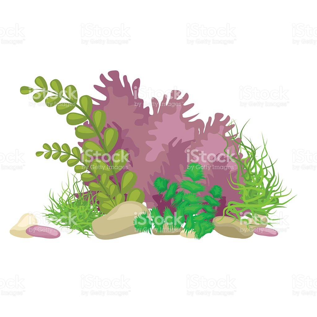 Coral pencil and in. Algae clipart drawn