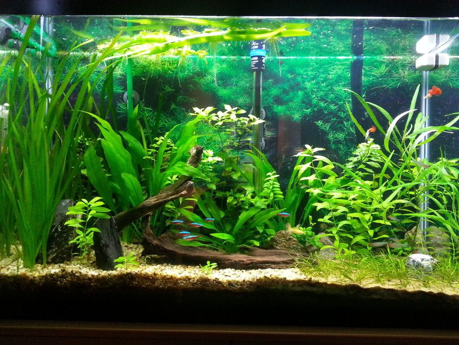 Algae clipart fish tank plant. Using driftwood and live