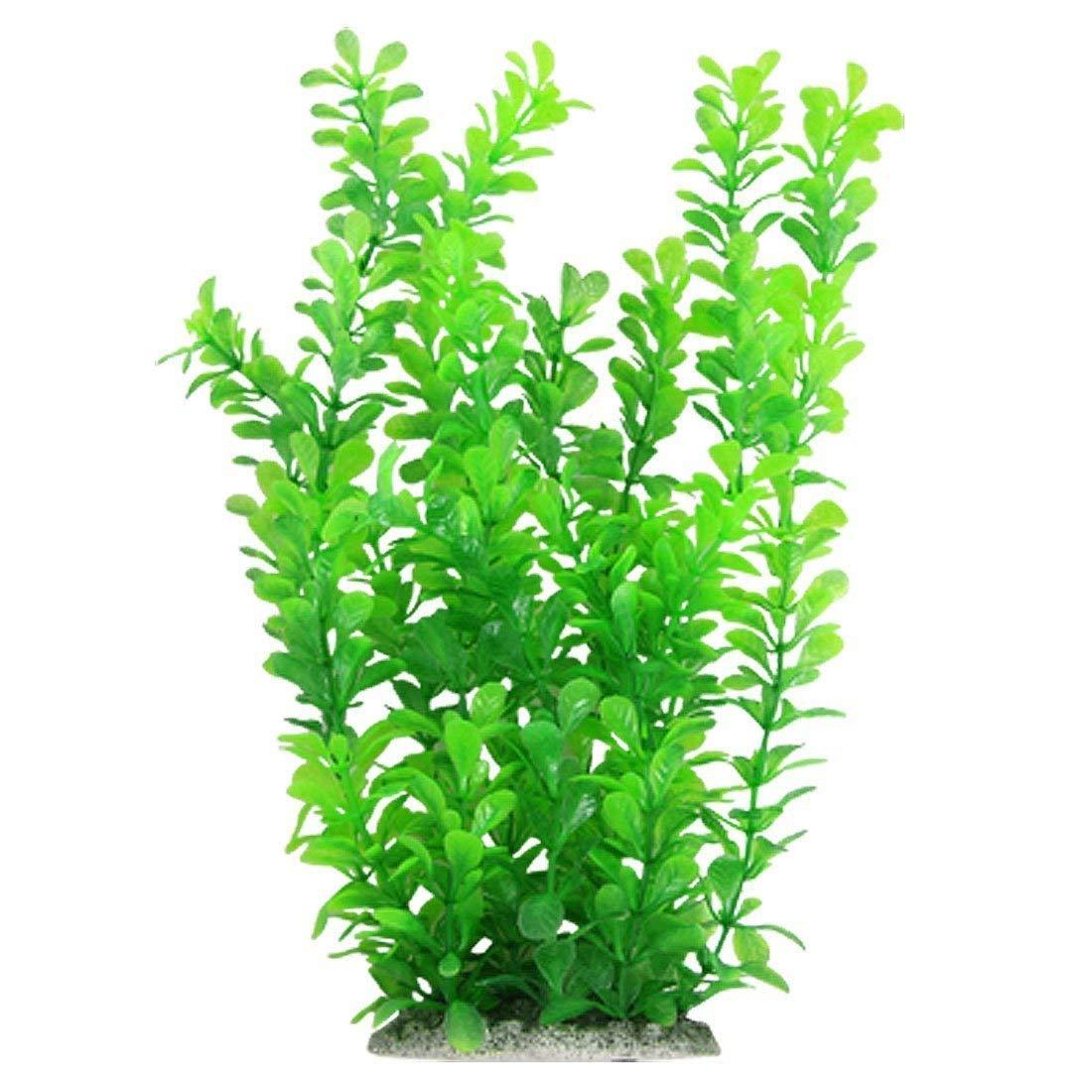 inch green fish. Aquarium clipart aquarium plant