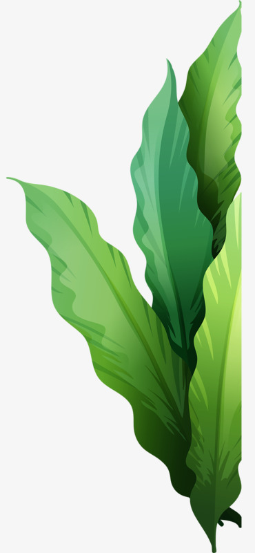 Green plant seabed png. Algae clipart flower