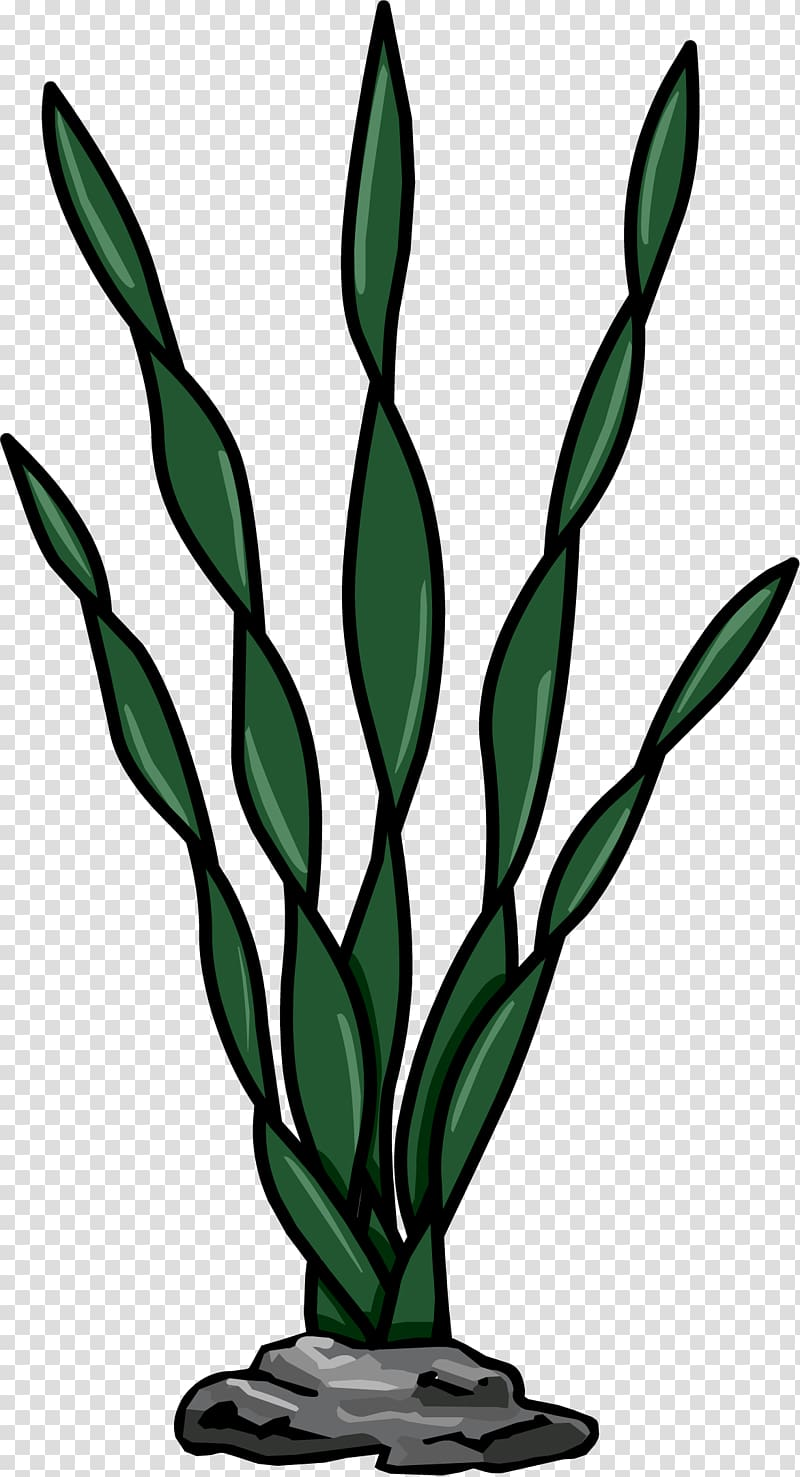 Algae clipart flower. Seaweed macrocystis pyrifera plant