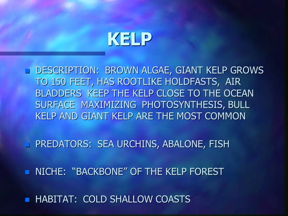 Algae clipart giant kelp. N description brown grows