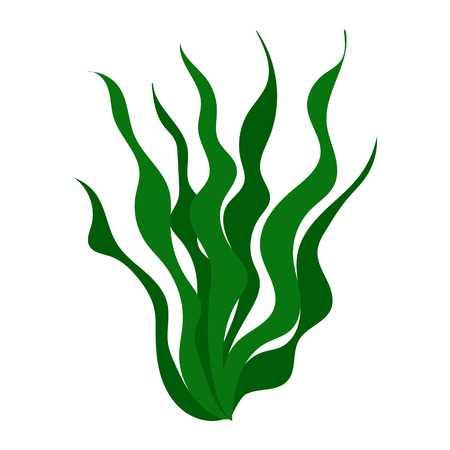 Free download clip art. Algae clipart green algae