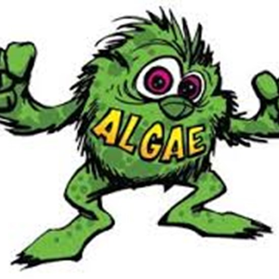 Algae clipart green algae. There are numerous types