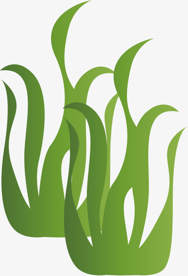 Algae clipart green algae. Vector modified png and