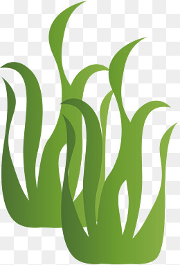 Algae clipart green algae. Portal