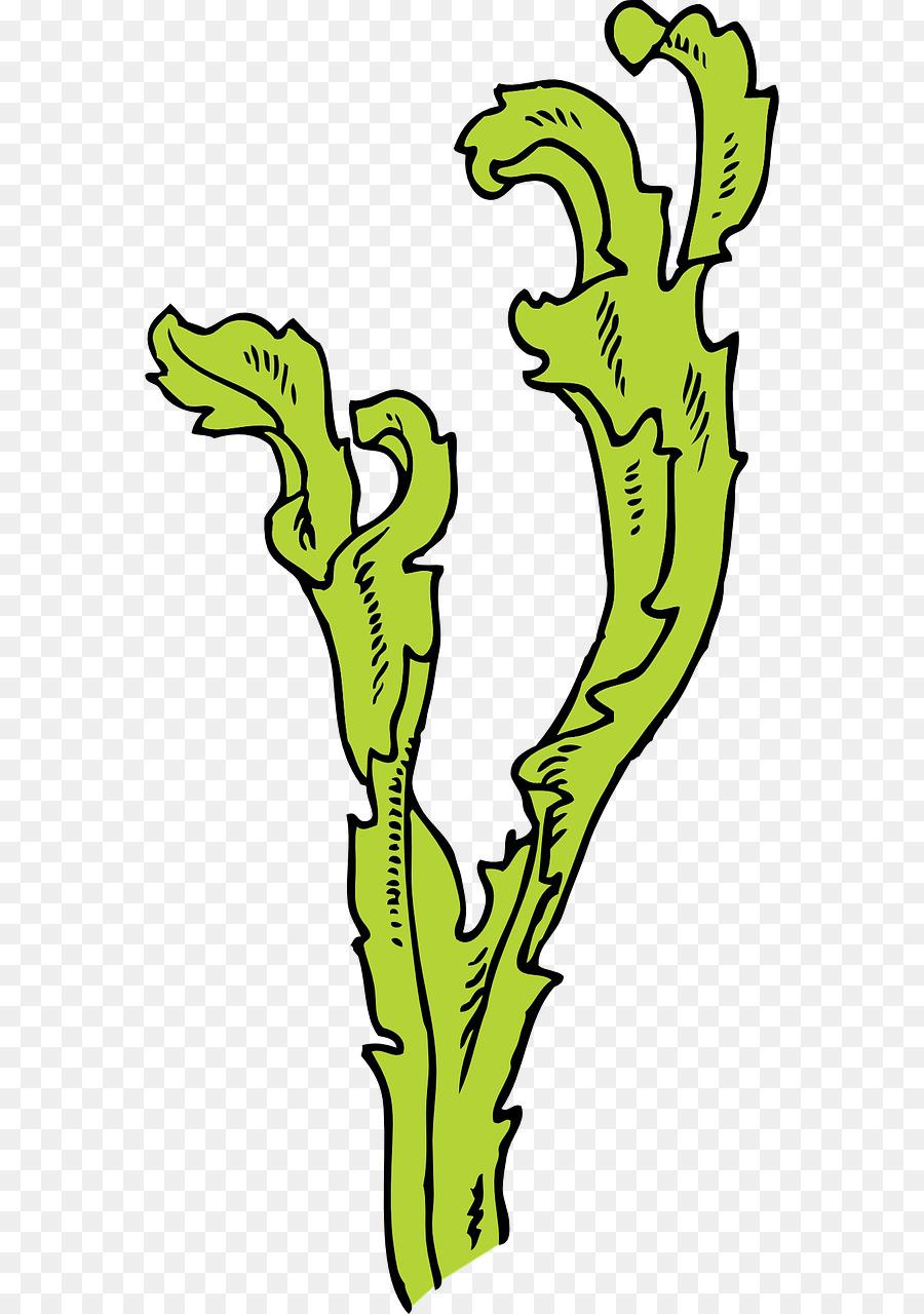 Seaweed Kelp Algae Clip art