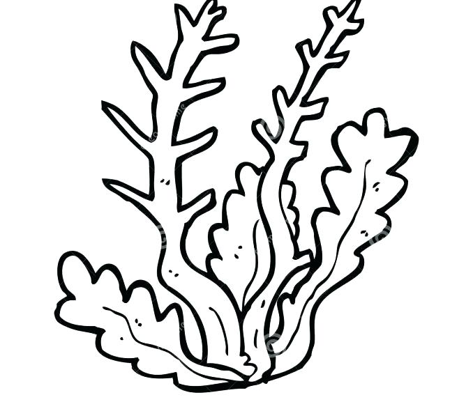 Sea weed coloring pages. Algae clipart outline