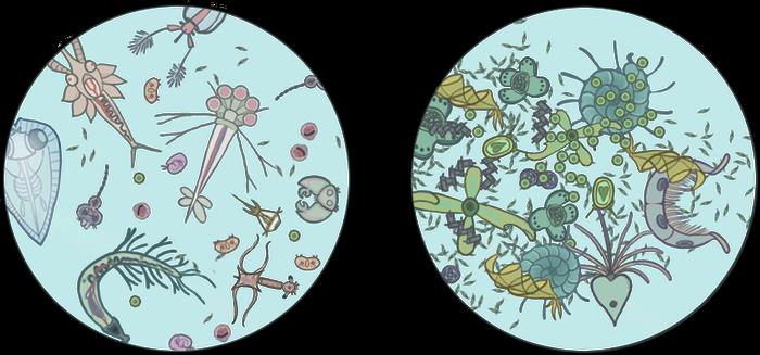 Algae clipart plankton. Phytoplankton explore on deviantart