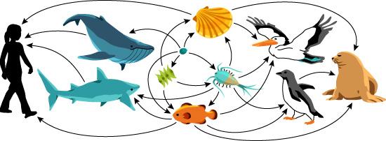 Ask a biologist are. Algae clipart plankton