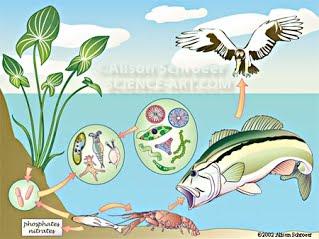 Algae clipart pond algae. Niche habitat and distribution