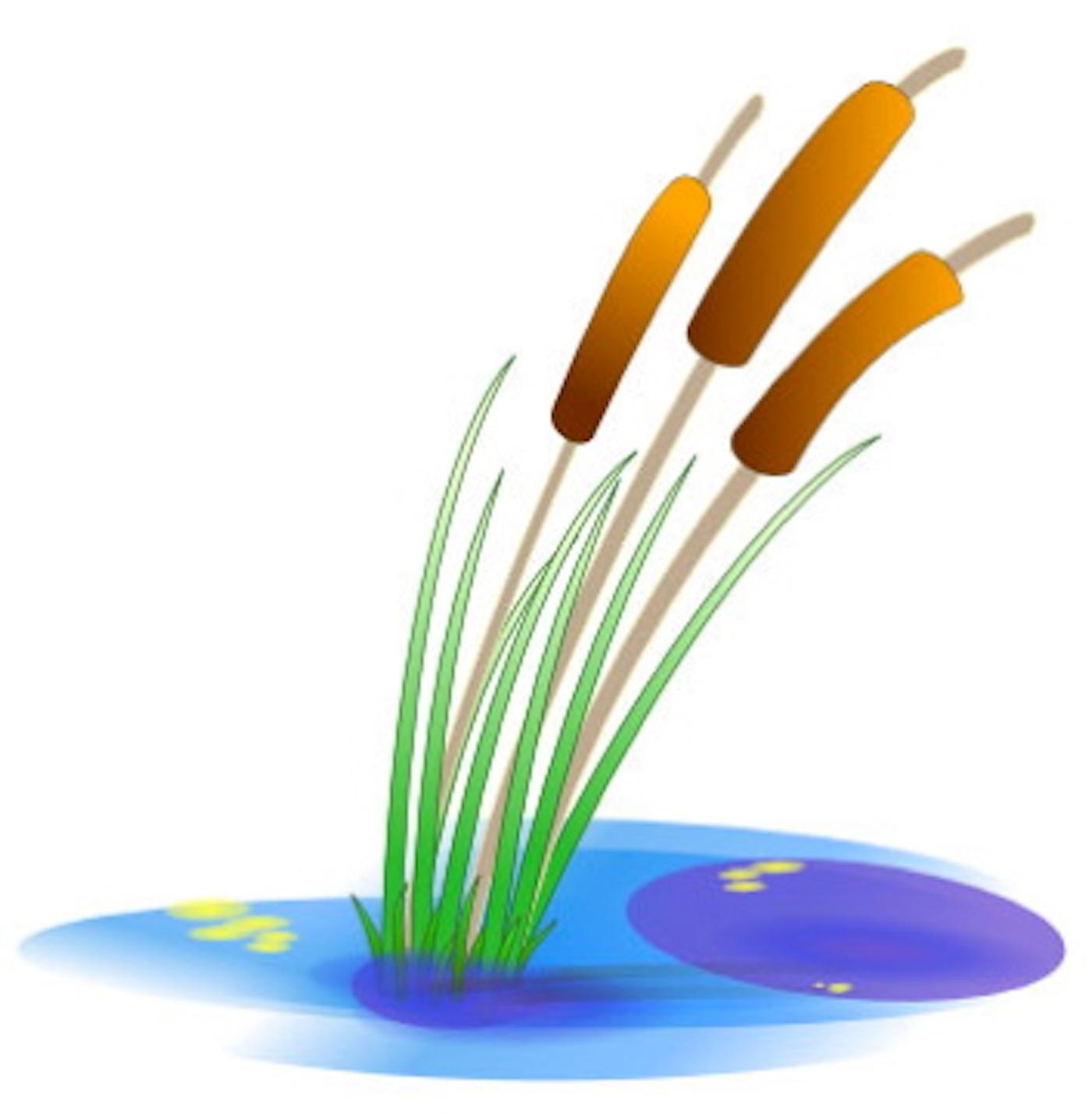 Algae clipart pond algae. Solutions pondcast blog talk